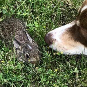 Rika and Bunny